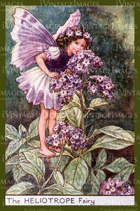 Cicely Barker 1923 - 30 - The Heliotrope Fairy