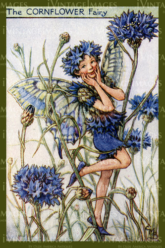 Cicely Barker 1923 - 34 - The Cornflower Fairy