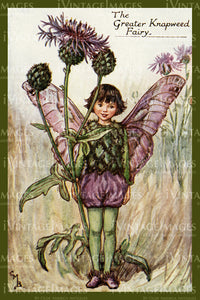 Cicely Barker 1923 - 36 - The Greater Knapweed Fairy