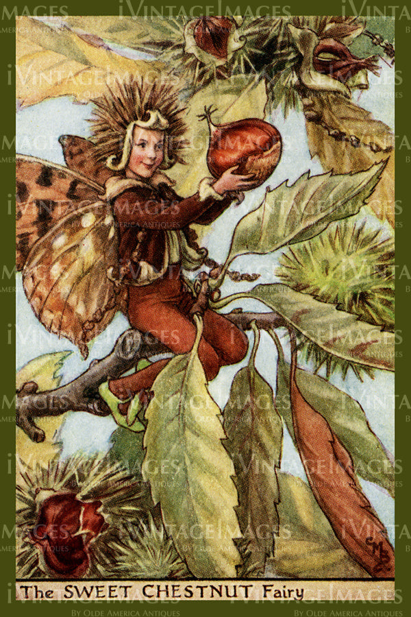 Cicely Barker 1923 - 40 - The Sweet Chestnut Fairy