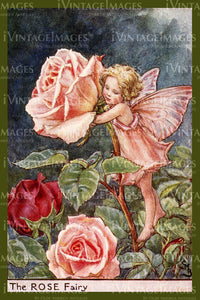 Cicely Barker 1923 - 42 - The Rose Fairy