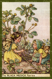 Cicely Barker 1923 - 46 - The Black Medic Fairy
