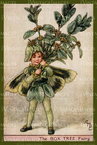 Cicely Barker 1923 - 49 - The Box Tree Fairy