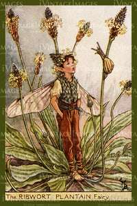Cicely Barker 1923 - 52 - The Ribwort Plantain Fairy