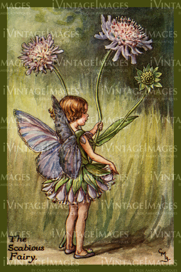 Cicely Barker 1923 - 54 - The Scabious Fairy