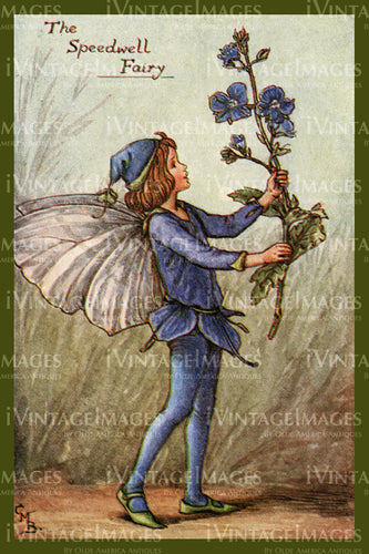 Cicely Barker 1923 - 56 - The Speedwell Fairy