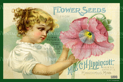 Lippincott Flower Seeds 1898 - 002