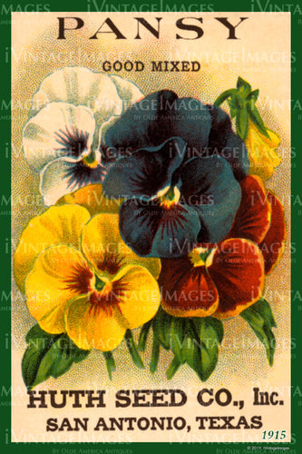 Pansy Flower Seeds 1915 - 006