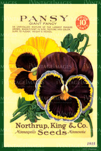 Pansy Flower Seeds 1915 - 007