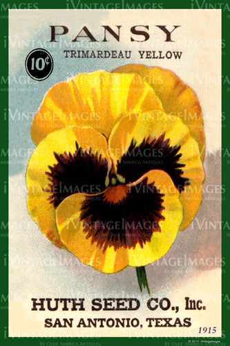 Pansy Flower Seeds 1915 - 008