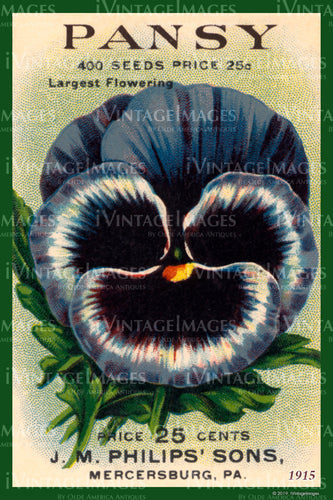 Pansy Flower Seeds 1915 - 009