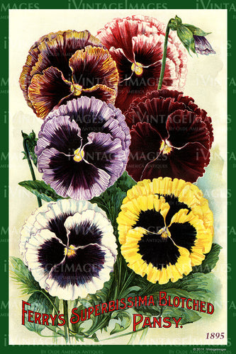 Ferry Flower Seeds 1895 - 010
