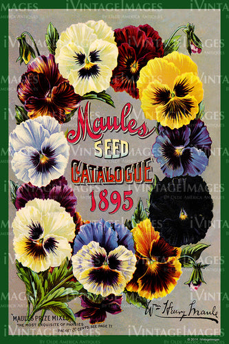 Maules Flower Seeds 1895 - 012