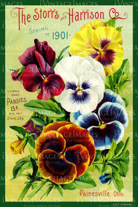 Storrs and Harrison Flower Seeds 1901 - 013