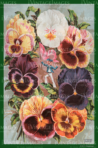 Vicks Flower Seeds 1895 - 015