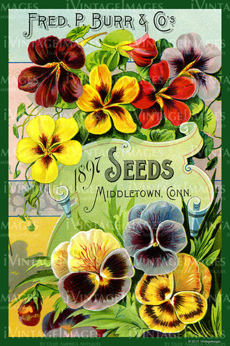 Fred Burr Flower Seeds 1897 - 017