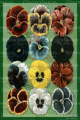 Vaughans Flower Seeds 1895 - 018
