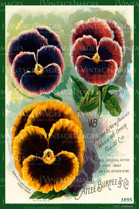 Atlee Burpee Flower Seeds 1895 - 020