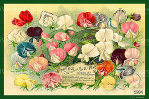 Rices Flower Seeds 1904 - 037