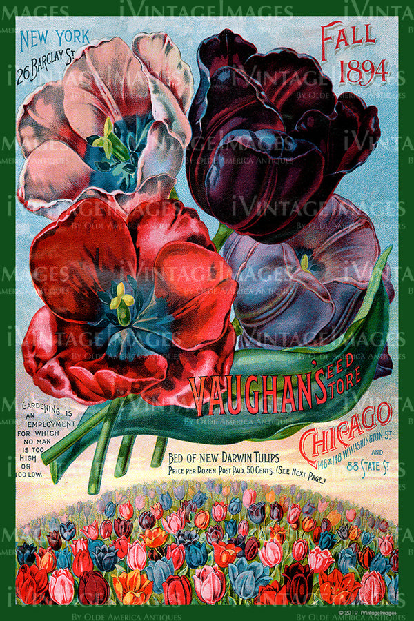 Vaughans Flower Seeds 1894 - 045