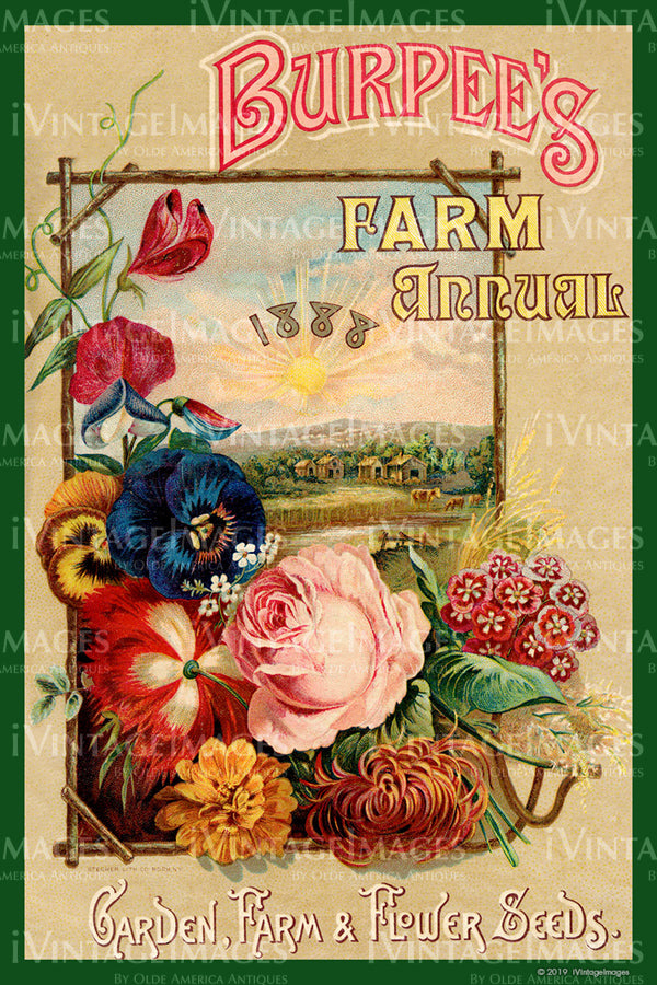 Burpees Flower Seeds 1888 - 050