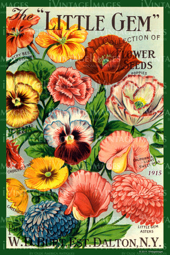 Little Gem Flower Seeds 1915 - 053