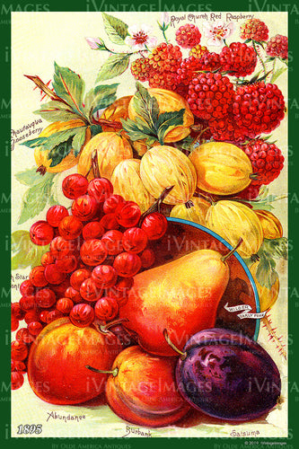 Mixed Fruit 1895 - 003