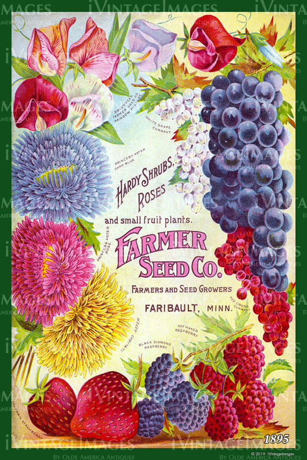 Farmer Seed Mixed Fruit 1895 - 005