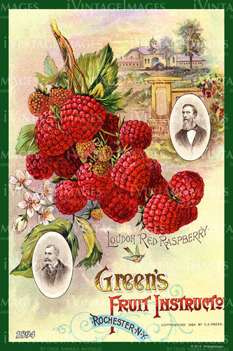 Greens Raspberries 1894 - 006