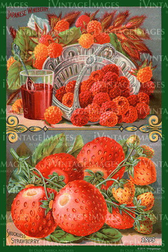 Mixed Berries 1895 - 007
