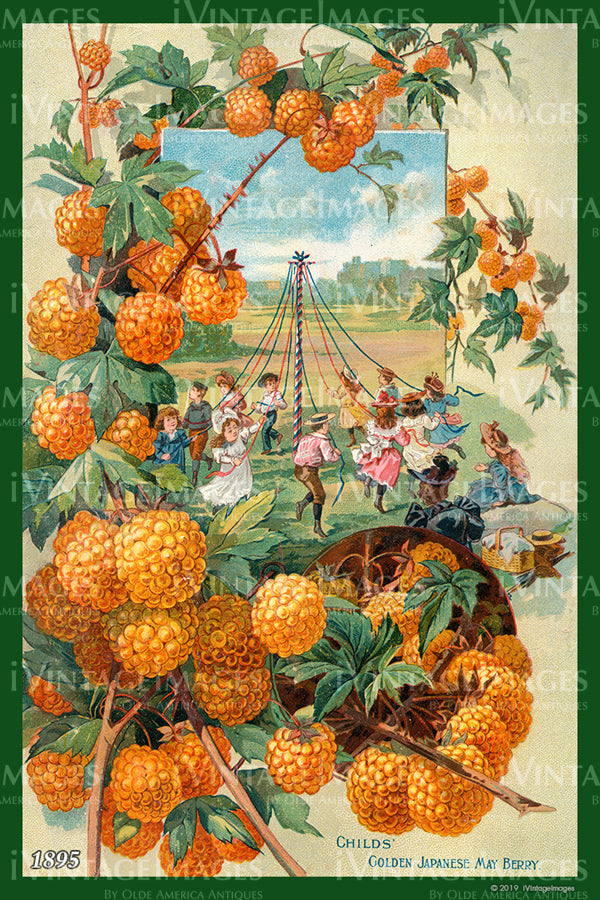 Childs May Berries 1895 - 008