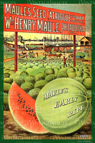 Maules Watermelons 1889 - 009