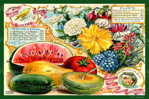 Mixed Fruit and Melons 1895 - 010