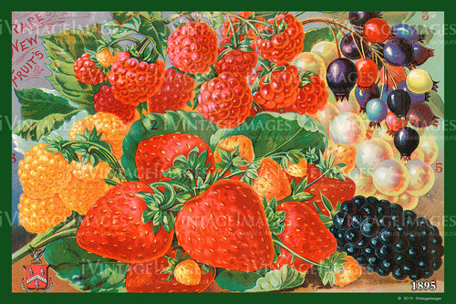 Mixed Berries 1895 - 011