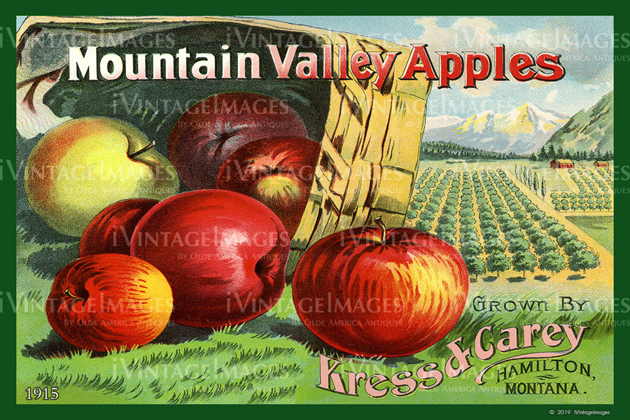 Mountain Valley Apples 1915 - 017