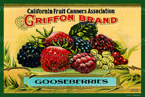 California Gooseberries 1915 - 020