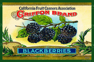 California Blackberries 1915 - 021