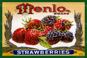 Menlo Strawberries 1915 - 028