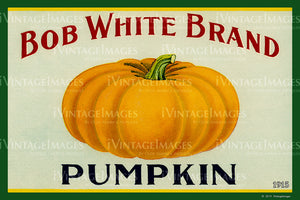 Bob White Pumpkin 1915 - 037