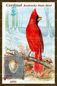 Kentucky State Bird Cardinal 1895 - 014