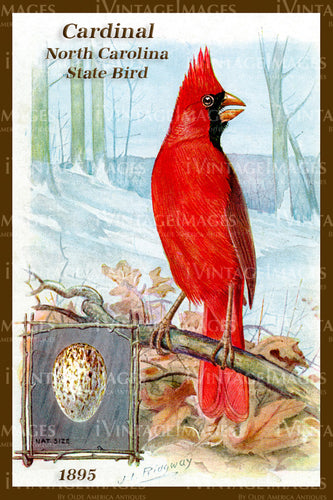 North Carolina State Bird Cardinal 1895 - 025