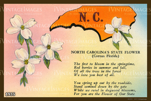North Carolina State Flower 1935 - 029