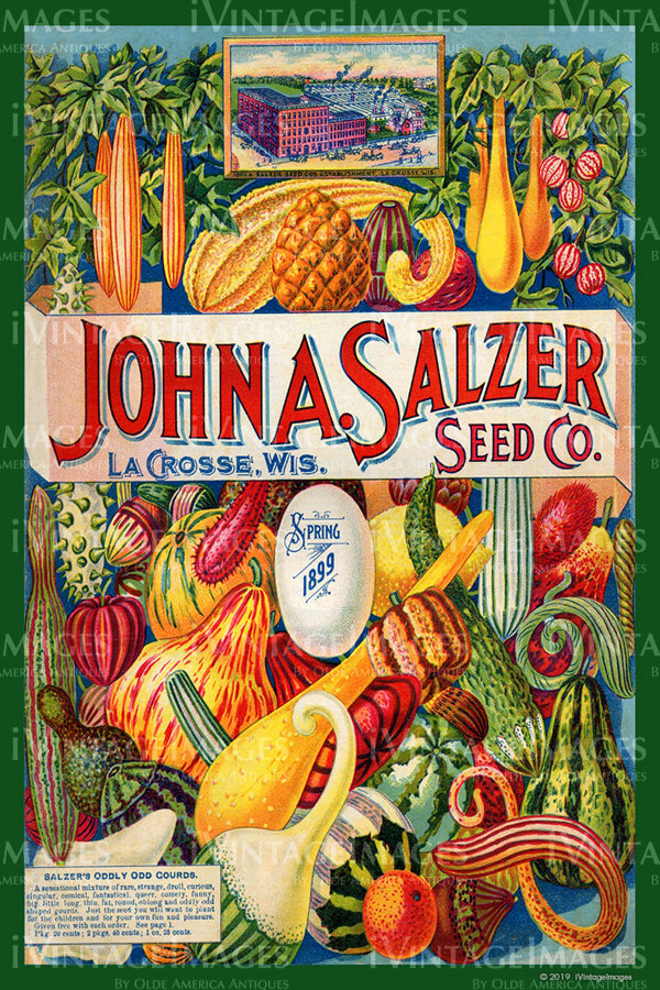 John Salzer Vegetables 1899 - 001