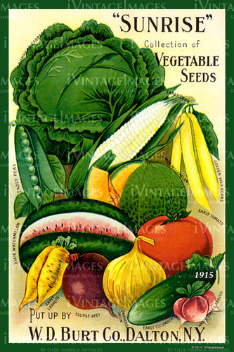 Sunrise Vegetables 1915 - 008