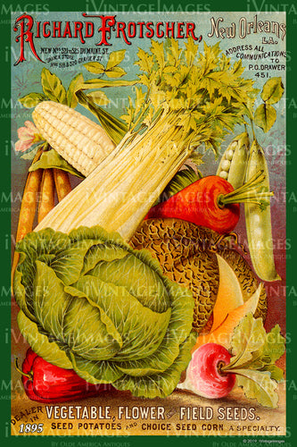 Richard Frotscher Vegetables 1895 - 017