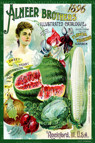 Alneer Vegetables 1896 - 019