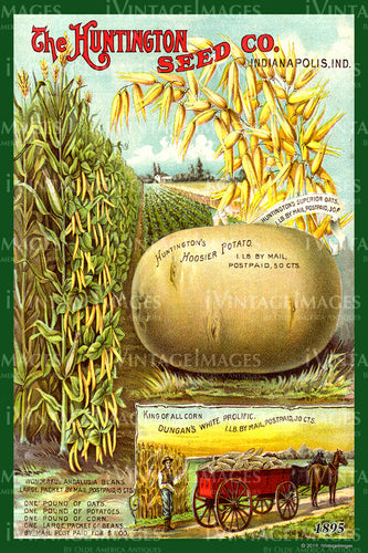 Huntington Vegetables 1895 - 021