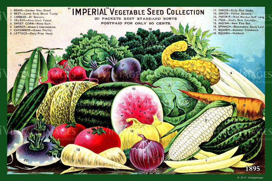 Imperial Vegetables 1895 - 028