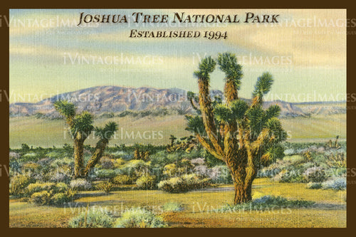 Joshua Tree Postcard 1930 - 10