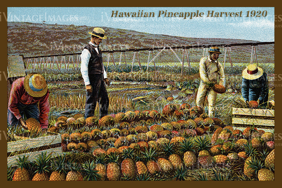 Hawaii Postcard 1920 - 16